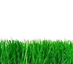 Picture of Newly Cut Grass