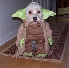 SW-Yoda-Dog.jpg