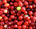 Picture of Cranberry