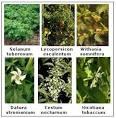 Family Solanaceae | Tutorvista.