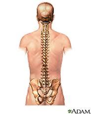 http://www.nlm.nih.gov/medlineplus/images/spine.jpg