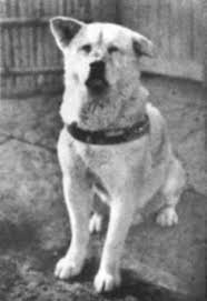 Hachiko