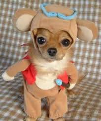 dog-costume.jpg