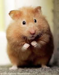 The Alzheimer's Hamster Within YOU