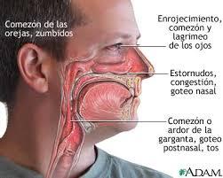 http://prevencion-de-salud.com/wp-content/rinitis-alergica.jpg