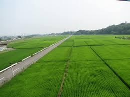 http://images.google.com/images?q=tbn:U8QuNmJCLwMxsM::idata.over-blog.com/0/01/57/76/japon/riziere_en_aout_01.jpg