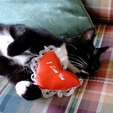 cat-i-love-you.jpg