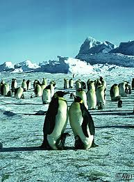 http://www.awi-bremerhaven.de/Eistour/pinguine-e.html