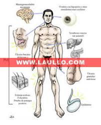 http://www.laullo.com/medicina/ilustracion_medica/reuma/images/sindrome_de_behcet_jpg_jpg.jpg